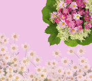 Scenic pink floral background with roses, daisies. And green leaves Stock Image