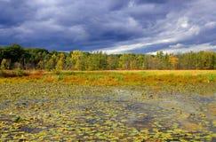 Scenic pond Stock Image