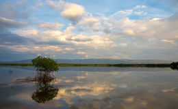 Scenic pond with reflections of the clouds Stock Photography