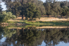 Scenic pond with oak trees reflected in quiet, serene, blue water in southern California mountains Royalty Free Stock Photography
