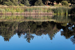 Scenic pond w/ oak & pine & trees & reeds reflected in calm blue water in southern California mountains Stock Photos