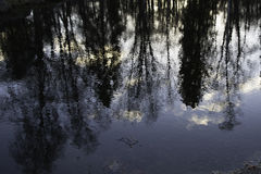 Scenic portrait of trees reflected in water Royalty Free Stock Images