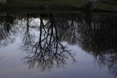 Scenic portrait of trees reflected in water. Scenic winter view of trees reflected in water, taken in Kadriorg park, Tallin, Estonia Royalty Free Stock Image