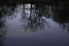 Scenic portrait of trees reflected in water Stock Images