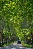 Scenic Provencal large old plane trees alley in summer royalty free stock image