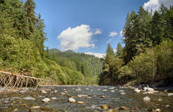 The scenic quinault river. This is the quinault river in the olympic national park,were i had gone camping.this area is the absolute best place to take pictures Royalty Free Stock Images