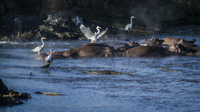 Scenic river in Kruger National park, South Africa Stock Photos