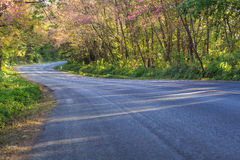 Scenic road with cheery blossom Royalty Free Stock Photography