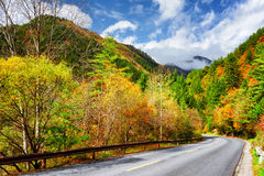 Scenic road among colorful fall woods. Autumn landscape royalty free stock image