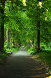 Scenic road through green forest Royalty Free Stock Image