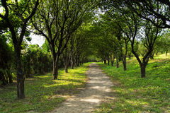 Scenic road through green forest. Romantic view of road in the forest stock photo
