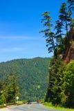 Scenic road, Olympic National Park, Washington royalty free stock photography