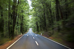 Scenic Road to Milford Sound Royalty Free Stock Photo