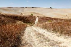 Scenic Road in Tuscan Countryside. Near Montalcino, Tuscany, Italy Royalty Free Stock Photo