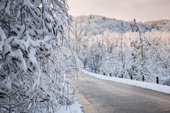 Scenic road in winter forest Stock Photo