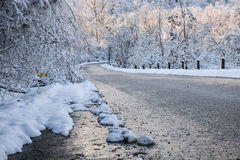 Scenic road in winter forest Royalty Free Stock Images