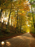 Scenic road in the woods Stock Photography