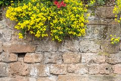 Scenic medieval castle wall with flowers. Scenic, rugged, weathered medieval castle wall with flowers stock images