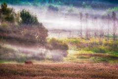 Scenic rural landscape. Scenic rural misty landscape at dawn stock photos