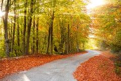 Scenic rural path Stock Photos