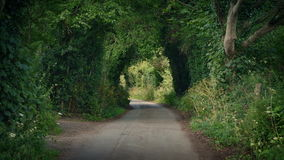 Scenic rural road in the summer. Peaceful summer scene of road through the country under an avenue of trees stock footage
