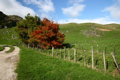Free Scenic Rural Vista Of Grassland, Rolling Hills, Barbed Wire Fence And Colored Trees On Sunny Day In Waitomo, New Zealand Stock Photography - 123863712