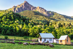 Scenic rustic landscape of peaceful countryside life with sheep grazing outdoors on a glade and Caucasus mountain peak at sunset Royalty Free Stock Images