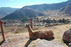 Scenic sacred valley,peru Stock Photography