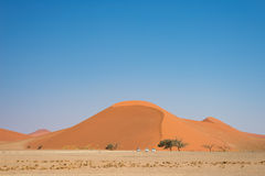 Scenic sand dunes in Sossusvlei, Namib Naukluft National Park, best tourist and travel attraction in Namibia. Adventure and explor. Ation in Africa Royalty Free Stock Images