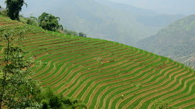 Scenic Sapa Vietnam. Time Lapse of Scenic Rice Terraces in the Northern Mountains of Vietnam - Sapa Vietnam stock footage
