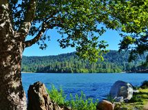 SCENIC SHORELINE VIEW OF LAKE GREGORY THROUGH A BROAD OAK TREE Stock Image