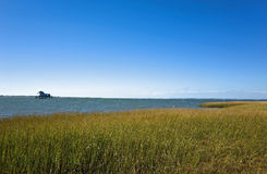 Scenic Shoreline. Scenic Virginia shoreline in Chincoteague National Wildlife Refuge.  The native grasses are beginning to turn color in the warm autumn sun Stock Image