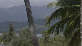 A scenic rural shot. A scenic shot of a beautiful paradise stock video footage