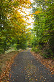 Scenic shot of narrow road along lush forest Royalty Free Stock Images