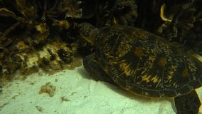 Scenic shot ofa turtle. A close up underwater scenic shot of a green turtle stock video