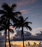 Scenic silhouettes of palm trees at sunset Stock Photo