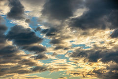 Scenic sky with beautiful clouds and flying bird, sunset stock images