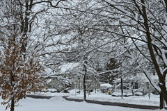 Scenic Snow Covered Trees Royalty Free Stock Image
