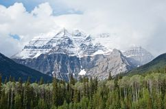 Scenic snow peak of Robson mountain and  pine forest in the summer royalty free stock images