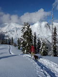 Scenic snowshoeing. A woman and her dog walk along a well formed snowshoeing mountain trail royalty free stock photography