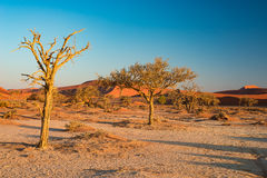 The scenic Sossusvlei and Deadvlei, clay and salt pan with braided Acacia trees surrounded by majestic sand dunes. Namib Naukluft Stock Image