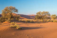 The scenic Sossusvlei and Deadvlei, clay and salt pan with braided Acacia trees surrounded by majestic sand dunes. Namib Naukluft. National Park, main visitor Stock Photography