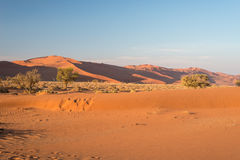 The scenic Sossusvlei and Deadvlei, clay and salt pan with braided Acacia trees surrounded by majestic sand dunes. Namib Naukluft. National Park, main visitor Stock Photo
