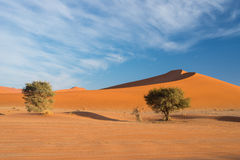 The scenic Sossusvlei and Deadvlei, clay and salt pan with braided Acacia trees surrounded by majestic sand dunes. Namib Naukluft Stock Photography