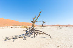 The scenic Sossusvlei and Deadvlei, clay and salt pan with braided Acacia trees surrounded by majestic sand dunes. Namib Naukluft Stock Photo
