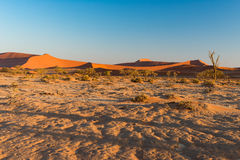 The scenic Sossusvlei and Deadvlei, clay and salt pan with braided Acacia trees surrounded by majestic sand dunes. Namib Naukluft Royalty Free Stock Image