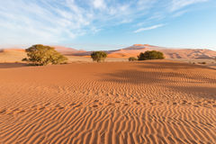 The scenic Sossusvlei and Deadvlei, clay and salt pan with braided Acacia trees surrounded by majestic sand dunes. Namib Naukluft. National Park, main visitor Royalty Free Stock Image