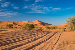 The scenic Sossusvlei and Deadvlei, clay and salt pan with braided Acacia trees surrounded by majestic sand dunes. Namib Naukluft Royalty Free Stock Images