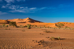 The scenic Sossusvlei and Deadvlei, clay and salt pan with braided Acacia trees surrounded by majestic sand dunes. Namib Naukluft Stock Photos