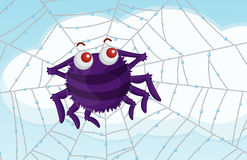 Scenic spider Royalty Free Stock Photography